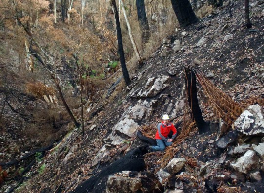 'Supergully' three most after the Victoria Valley fire, May 2013. Image: Heath Warwick, Museum Vitoria.